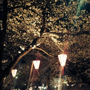 s 写真 2014 03 31 18 53 06 300x300 Full bloom(Sakura)