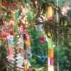 Japanese traditional event; Tanabata